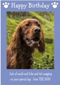 "Irish Setter-Happy Birthday - ""From The Dog"" Theme"